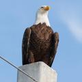 inspiration eagle
